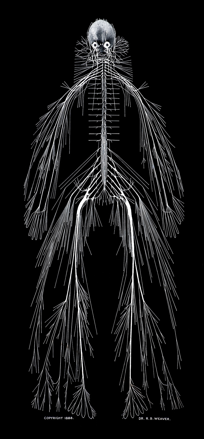 picture of the human anatomy hidden beauty exploring the aesthetics of medical science 3649